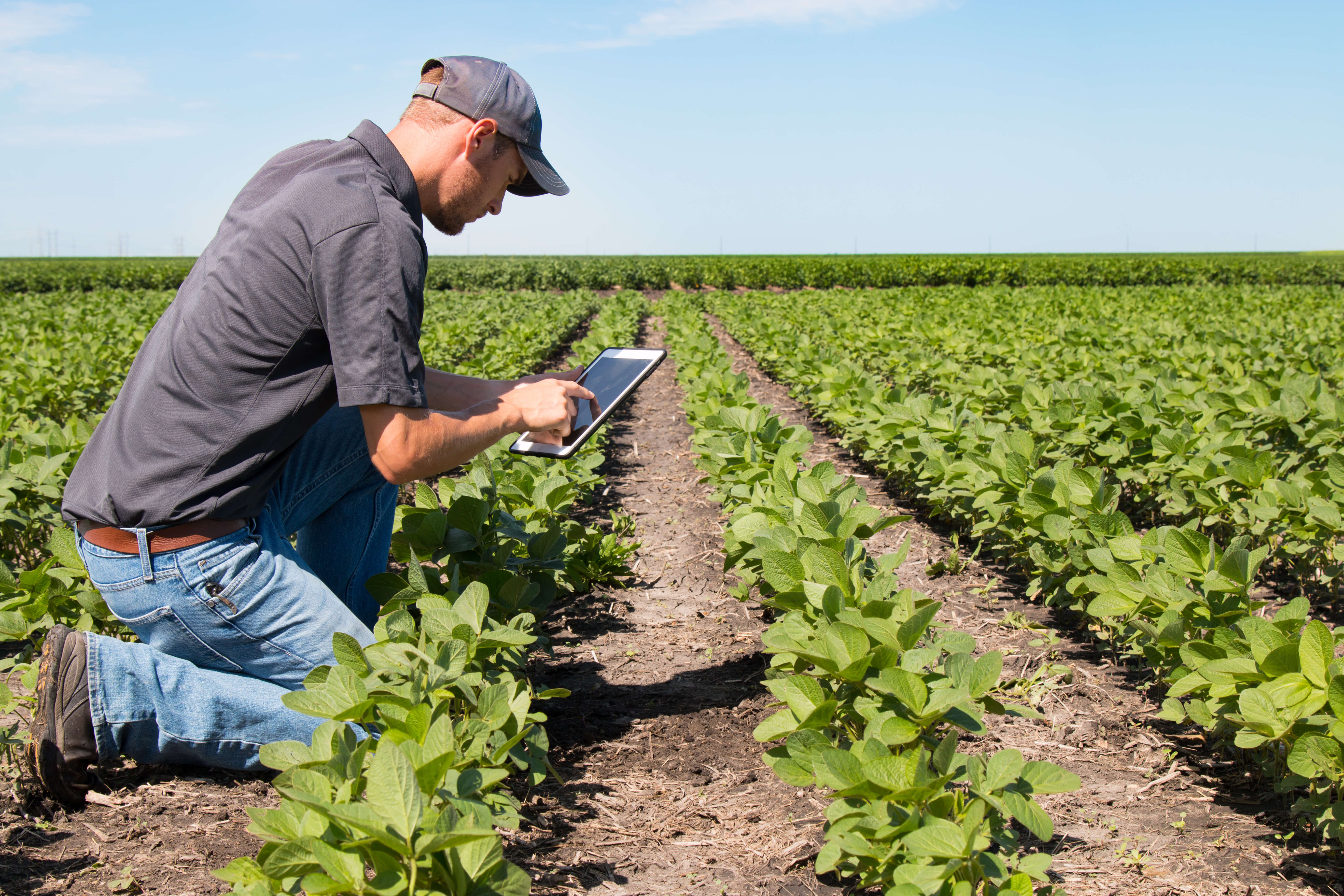 agriculture, farming, agritech